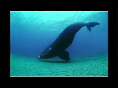 ブライアン・スケリー: 海中に広がる美しい世界と、その世界に起きている惨劇