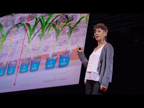 ジル・ファラント: 干ばつに耐えられる農作物の作り方