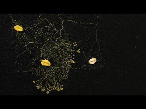 ヘザー・バーネット: 準知的粘菌が人類に教えてくれること