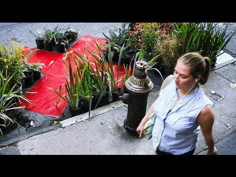 ナタリー・ジェレミジェンコ: 環境に変革をもたらす発想転換のアート