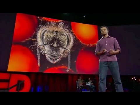 アナンド・ヴァルマー: 思わず息を呑む生後21日間のミツバチの姿