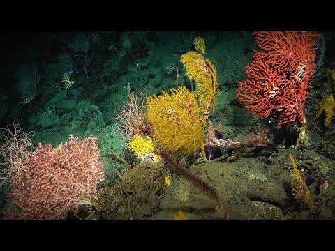 ローラ・ロビンソン: 神秘的な海底で私が出会う秘密