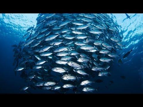 ジャッキー・サビッツ: 海を保護して世界に食料を