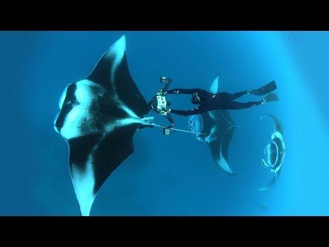 トーマス・ペスチャック: 海洋写真家の世界へ飛び込もう