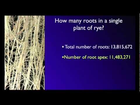 ステファノ・マンクソー: 植物が持つ知性の根