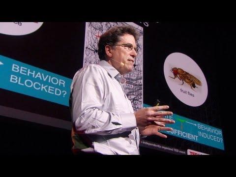 デイビッド・アンダーソン: あなたの脳はただの化学物質の袋ではない