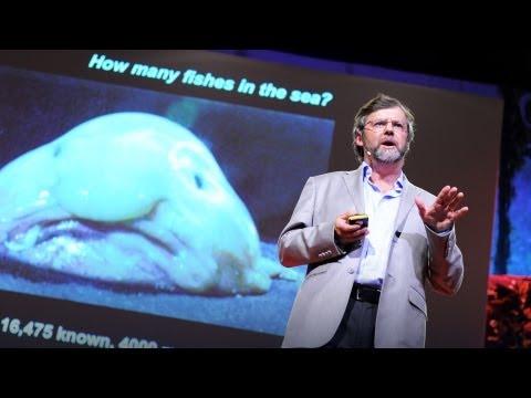 ポール・スネルグローブ: 海洋生物調査