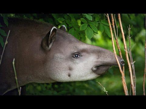 パトリシア・メディチ: 知られざる最高の動物 ― どうすれば救えるのか