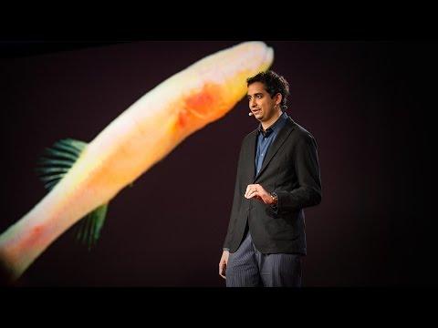 プロサンタ・チャクラバーティ: 盲目の洞窟魚に見る先史時代へのヒント