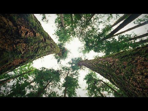 スザンヌ・シマード: 森で交わされる木々の会話