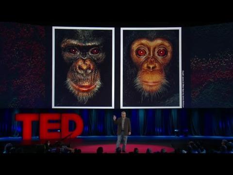 スティーブン・ワイズ: 感情や思考を持つチンパンジーに権利を!