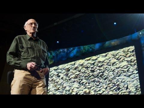 スチュアート・ブランド: 絶滅種再生の夜明けとそれが意味すること