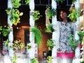 ブリッタ・ライリー: アパートの菜園