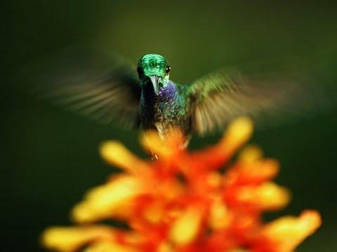 ルイ・シュワルツバーグ: 受粉の隠れた美しさ