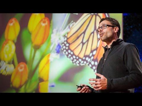 ジャープ・デ=ローデ: 自ら治療する蝶