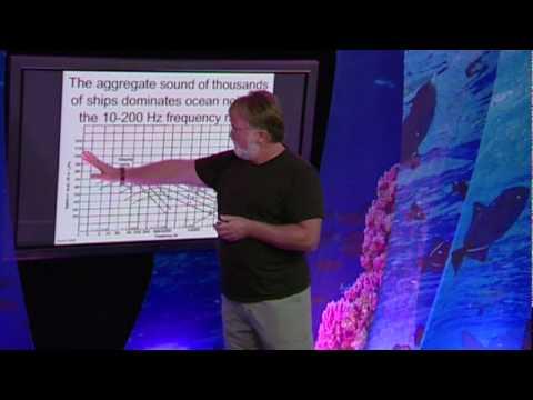 ピーター・タイヤック: 海洋哺乳類の興味深い鳴き声