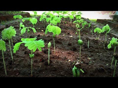 シュベンデュ・シャルマ: 自宅の裏庭に森を作る方法