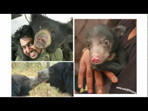 カーティック・サティアナラヤン: 踊らされる熊を救った方法