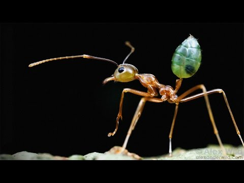 マレーネ・ズク: 虫たちの倒錯したセックスライフから学べること